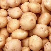 Продам картошку большую и семянку. Недорого