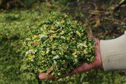 Продам силос кукурузный в Могилеве