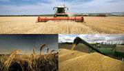 Куплю все виды зерна